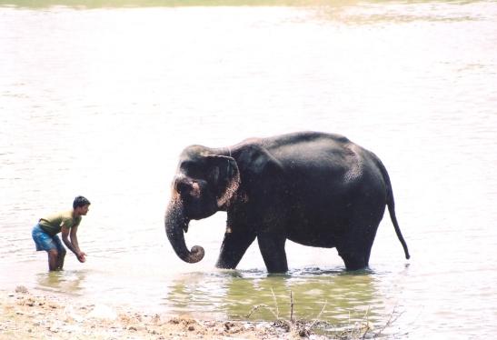 Elke hanteerder was sy eie olifant