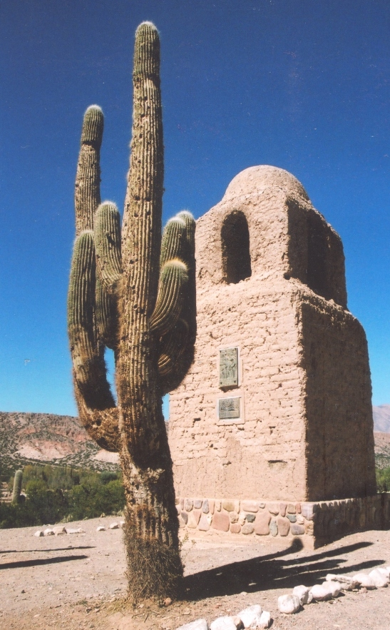 Kaktusse is waaragtig groot