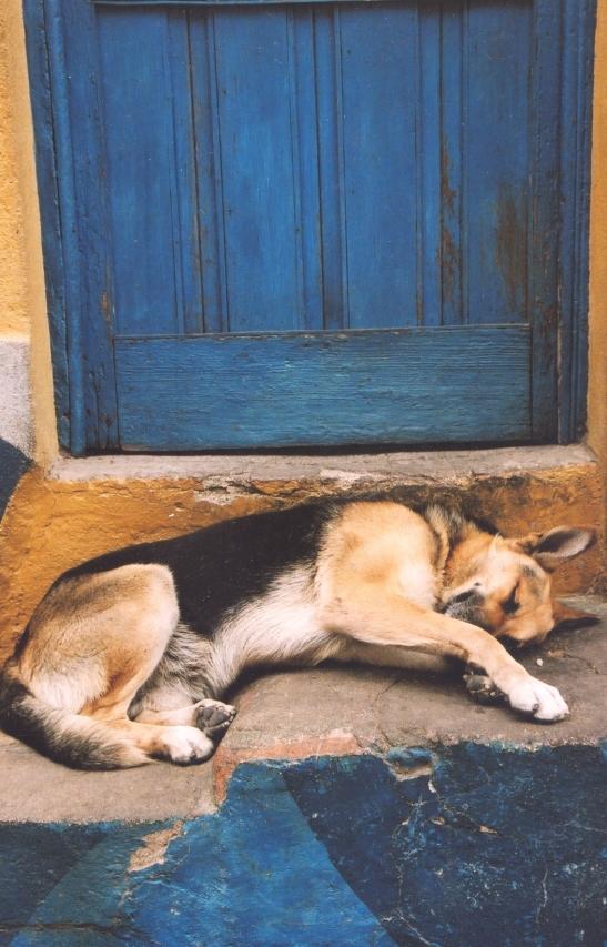 Klaarblyklik moet 'n mens nie slapende honde in Valparaiso wakkermaak nie