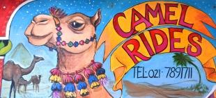 Kamele met lang wimpers woon by Imhoff