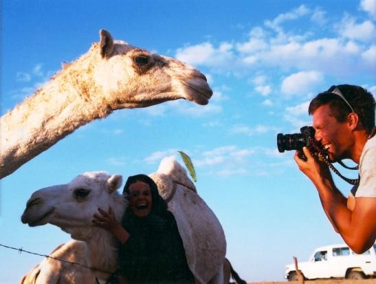 Kamele poseer vir foto's