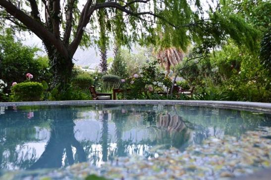 In Mimosa Lodge se tuin kom jy nie eers agter dat jy in die dorp is nie