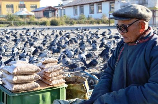 'n Omie wat duifsaad by die Ghan Kidd Monnikabdy verkoop