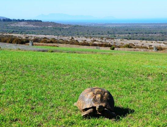 Vanaf !Khwa ttu kan jy al die pad tot by Tafelberg sien en sommer 'n skillie se rug ook kielie