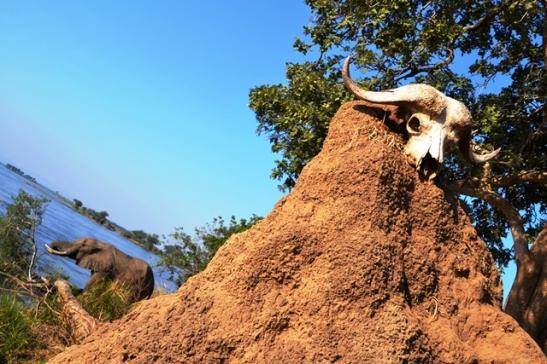 By Mana-poele kom die olifante soms nonchalant water drink