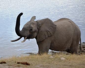 Oifantmis en olifant