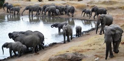 Ons sien honderde en honderde olifante op een slag by Hwange