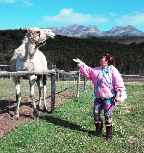Die kamele van Lekkerdroom is ekstroverte en kom geredelik nader as jy mooi vra