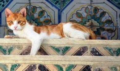 'n Gemmer bewaker van die trappe in Sidi Boe Said