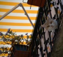 Kat se kind loer vir ons vanaf 'n balkon in Koper se systraatjies