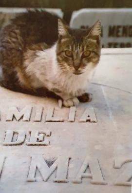 In Recoleta woon ook 'n paar katte