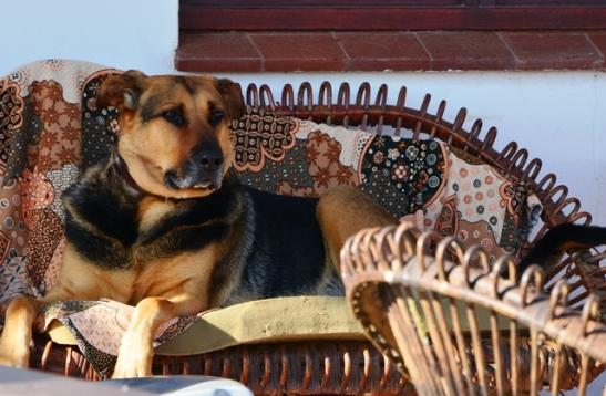 A resident of Hondeklipbaai relaxes on the stoep