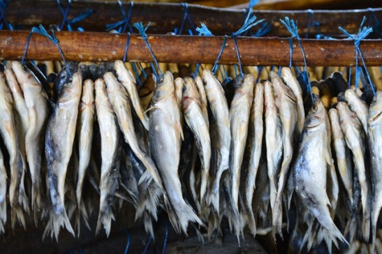 Bokkoms (or bokkems) are dried and salted mullet