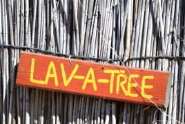 Forget about a lavatory, visit a lav-a-tree at Ngepi Camp