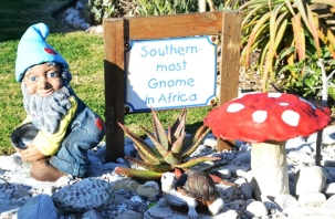 A fynbos garden is home to a family of gnomes in Cape Agulhas; the head of the family is the southernmost gnome in Africa