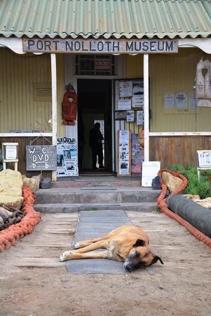 Die selfaangestelde waghond by die Port Nolloth Museum lig nie eers 'n wenkbrou met ons verbystap nie
