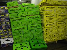 MlamboUVS-piesangs in heldergroen en -geel kartondose in een van die koelkamers by die mark