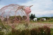 Piggly Wiggly begroet die besoekers vanuit 'n blombedding